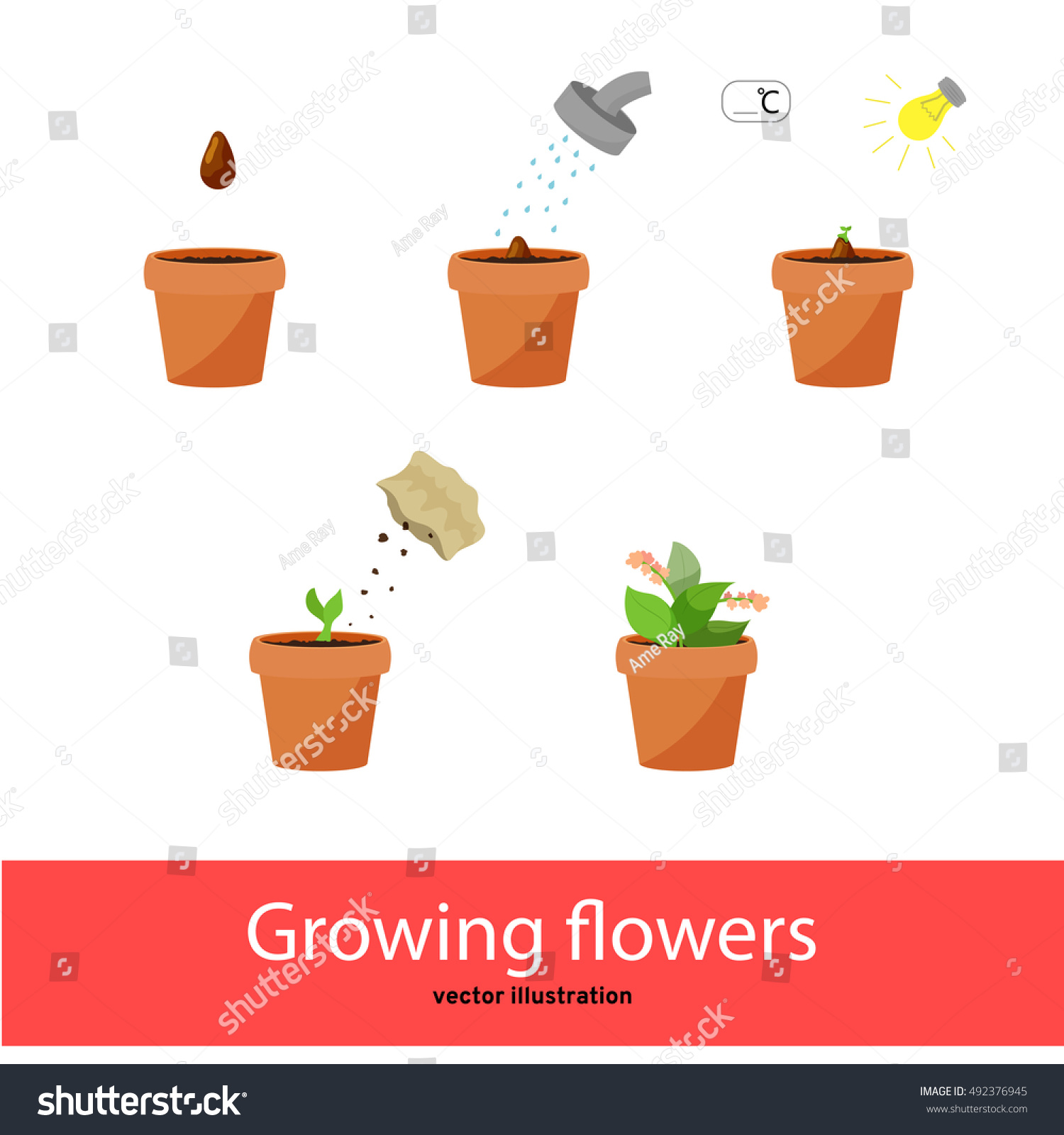 Stages Growing Flowers Part 2 Vector 492376945 on Plant Sprout