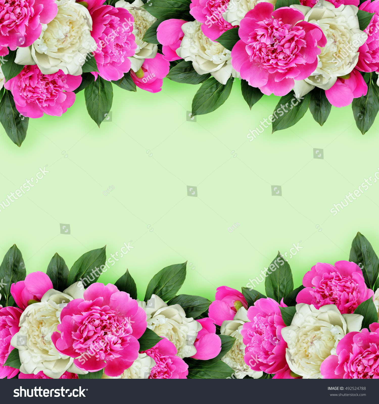 Pink And White Peonies Flowers Header Ez Canvas