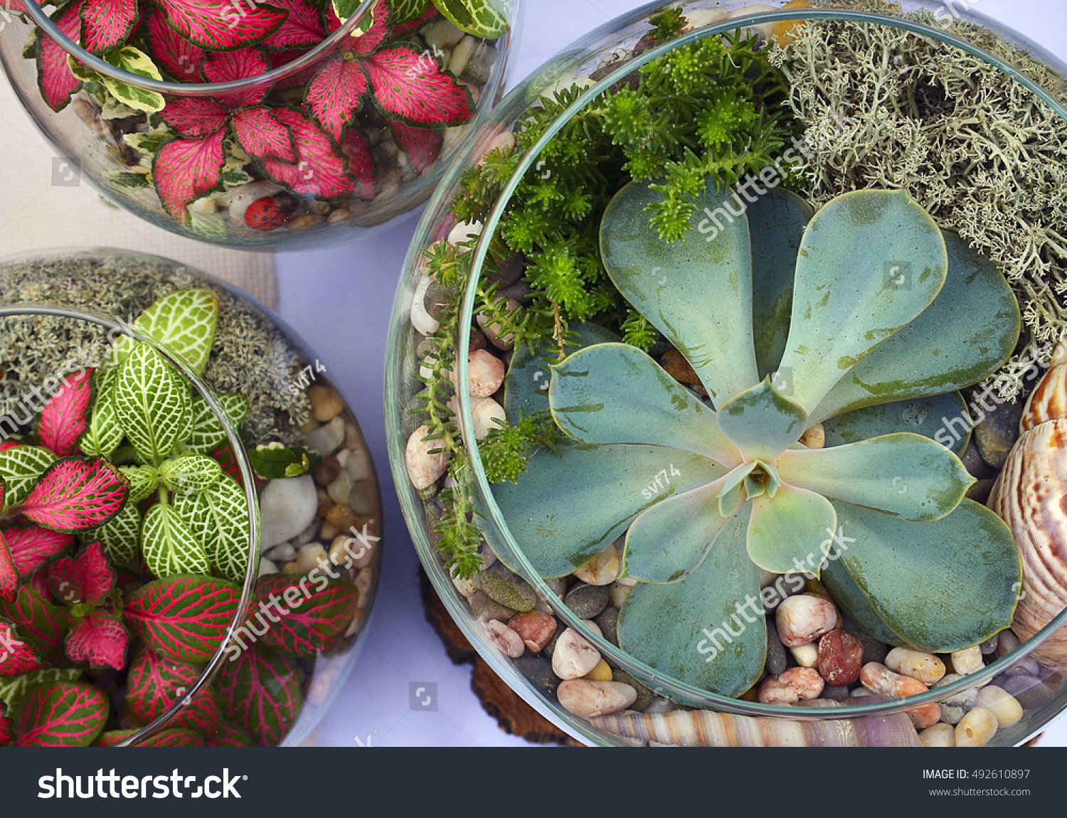 Decorative glass vases with succulent and cactus plants glass interior terrarium with succulents and cactuses