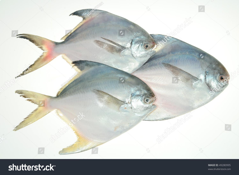 White Pomfret Fish On White Stock Photo 49280995 ...