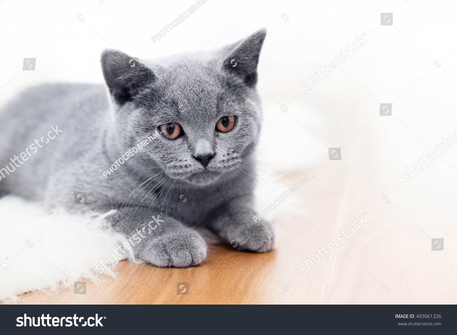 Young Cute Cat Playing Wooden Stock Shutterstock