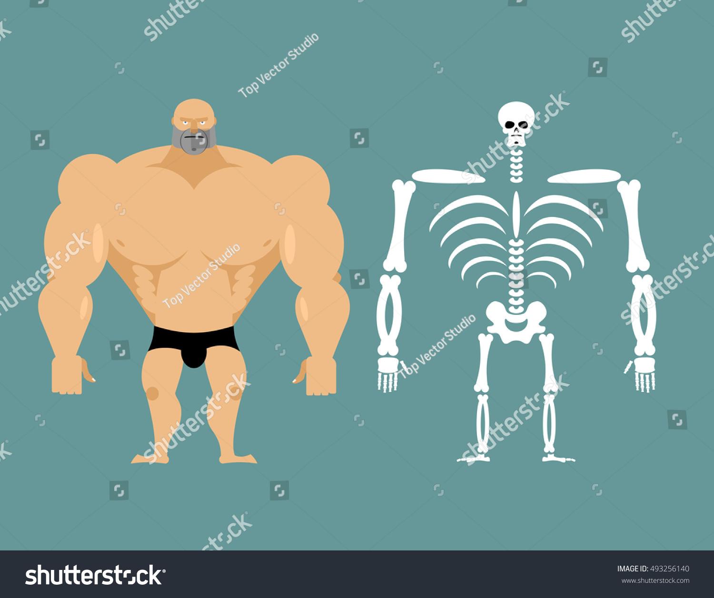 Human Structure Skeleton Men Anatomy Bodybuilder Stock Vector