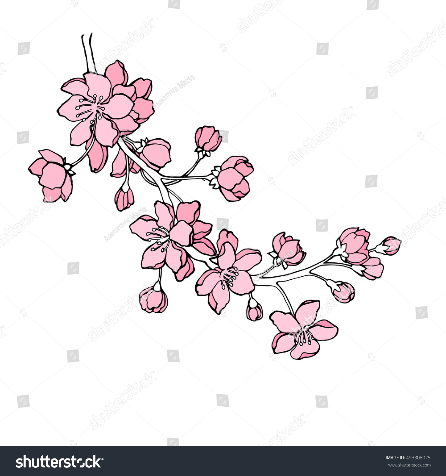 Vector Illustration Designer Sakura Branch Japanese Stock Vector ...