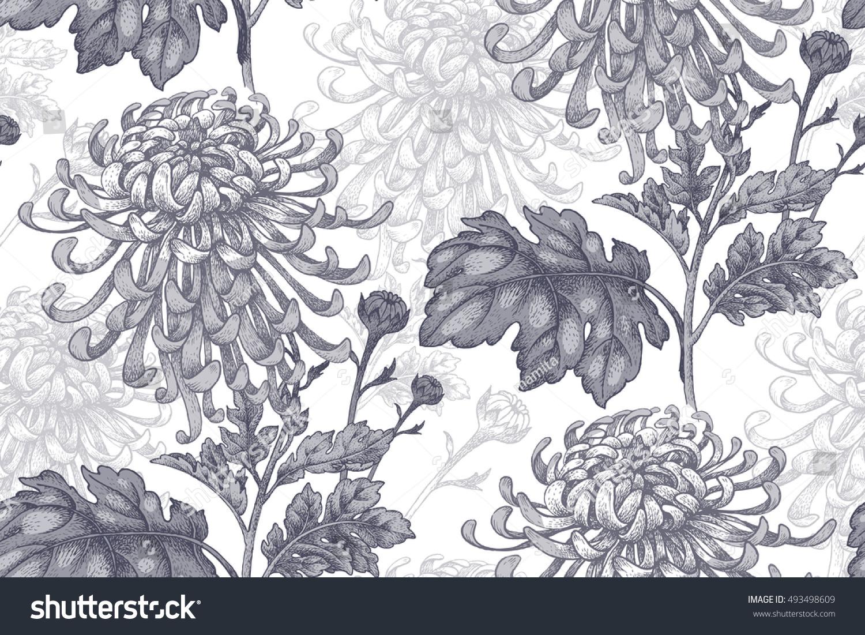 Flowers Black Chrysanthemum On White Background Stock Vector