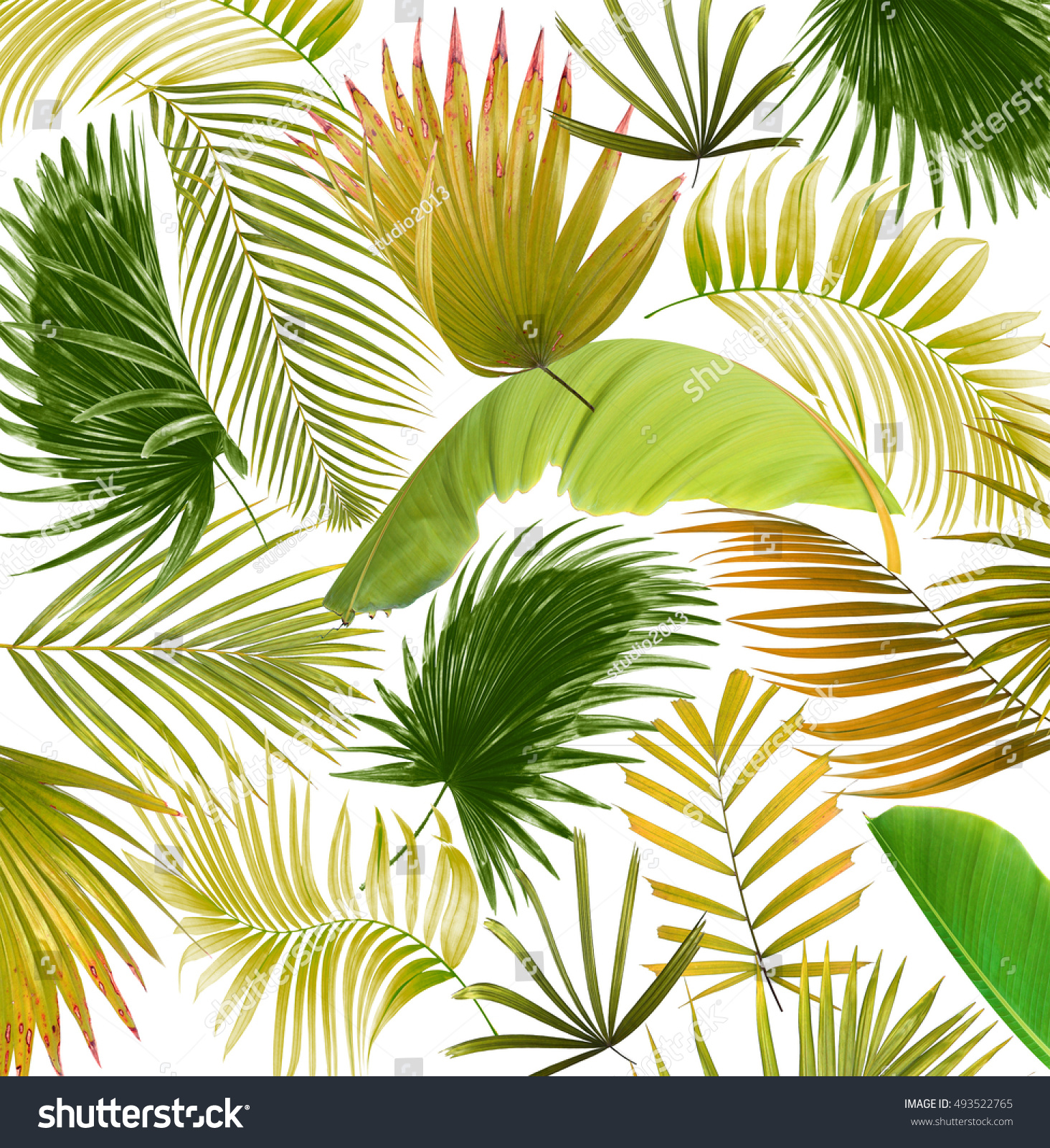 leaves of palm tree background | EZ Canvas