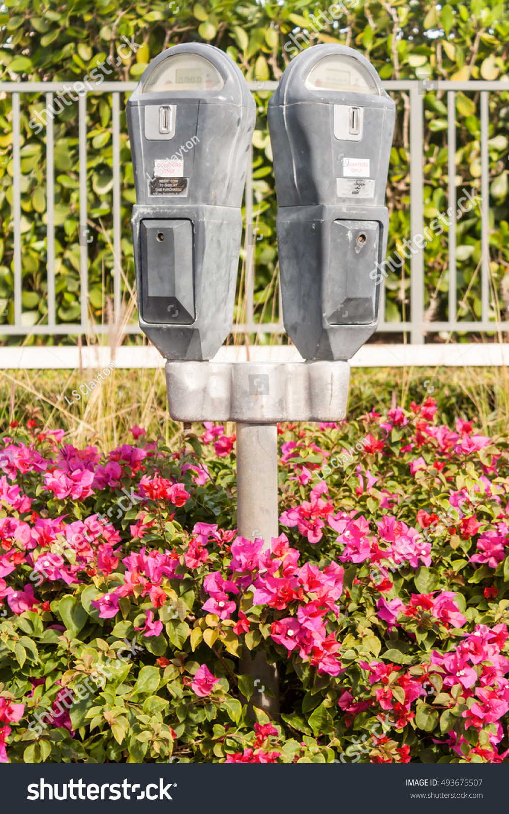 Parking Meters Surrounded By Pink Flowers Stock Photo Edit Now