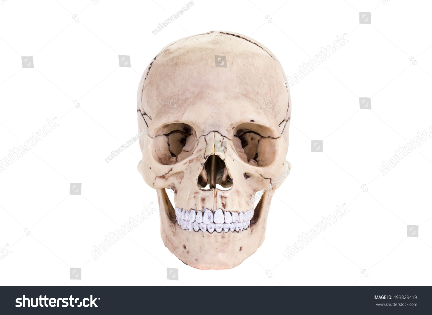 Human Skull Front Isolated On White Stock Photo Edit Now 493829419