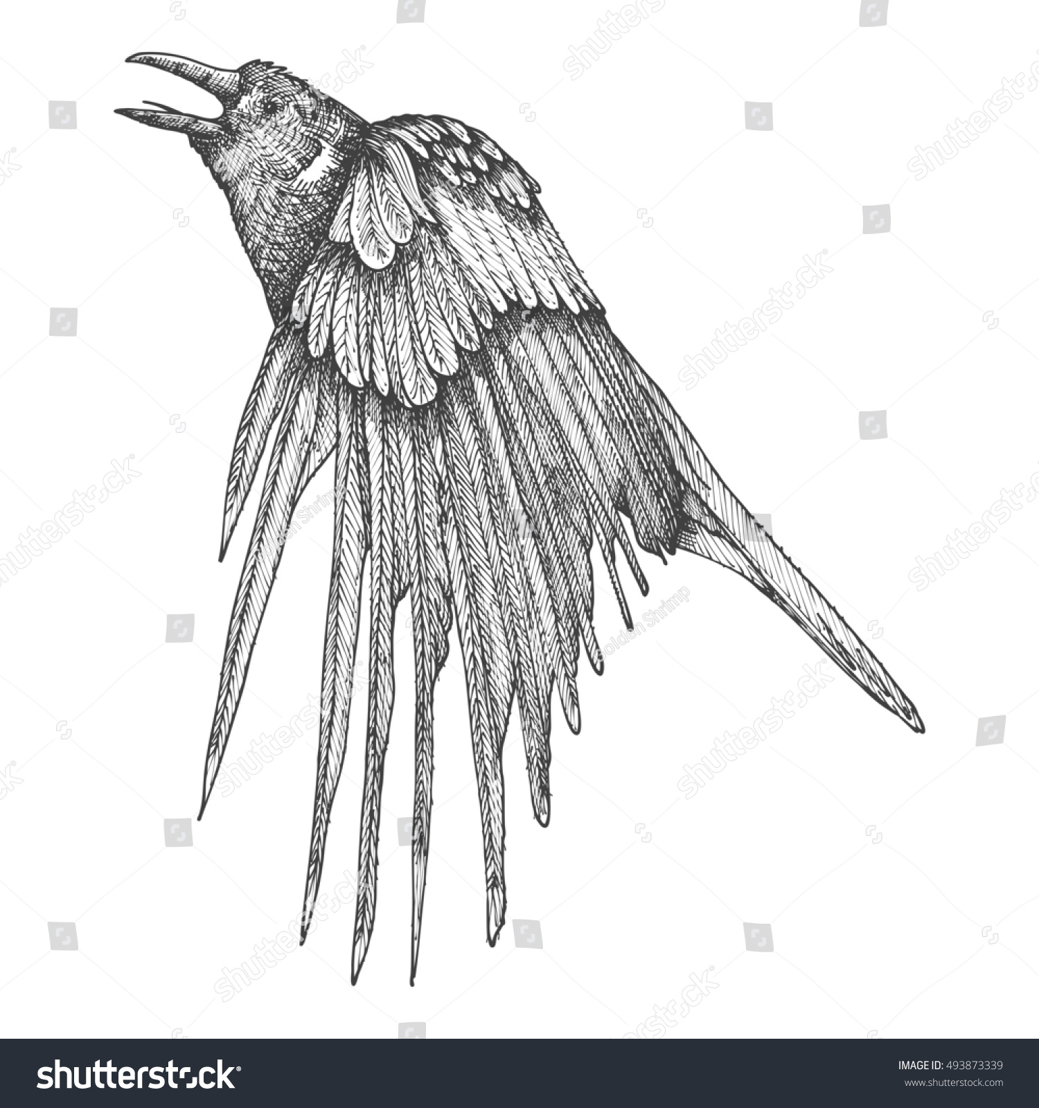 Line Drawing Raven : Stylized hand drawing crow decorative bird stock