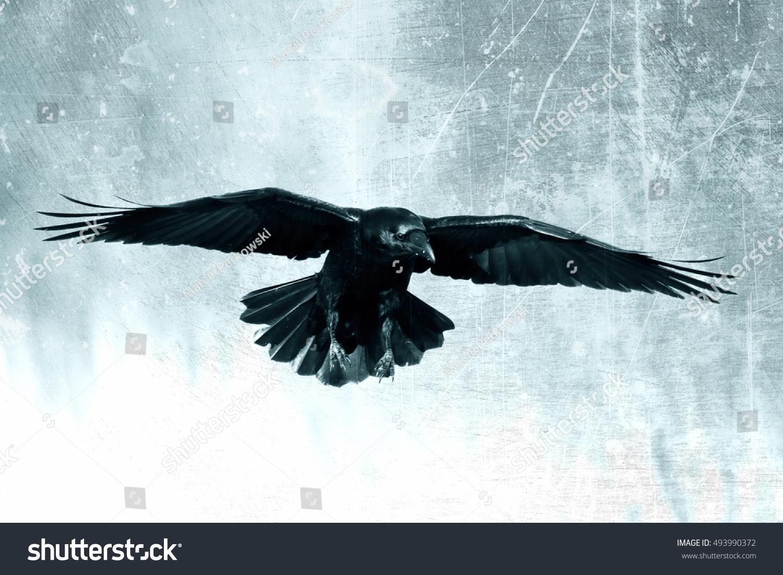 Bird - Black ra...