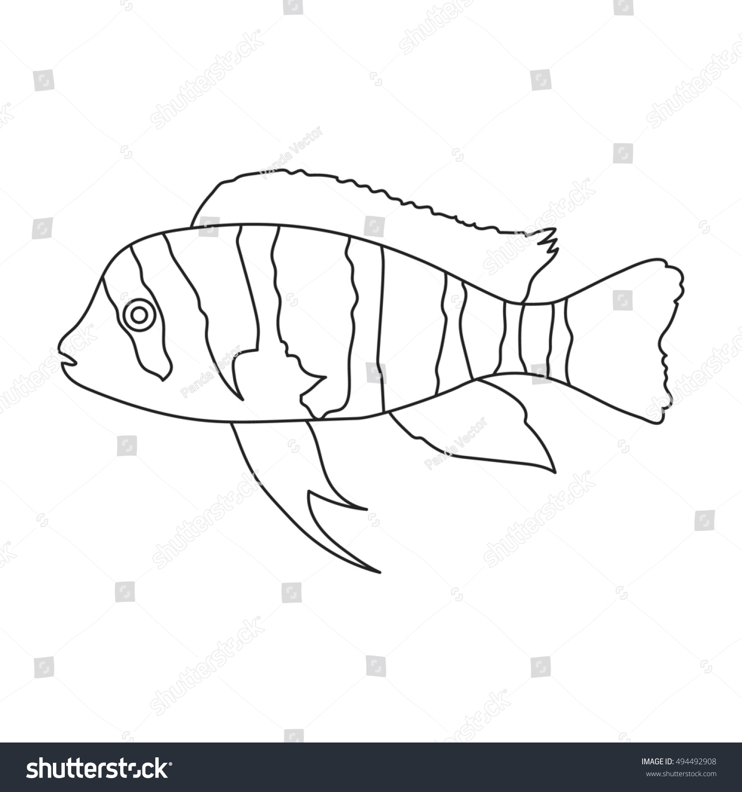 Frontosa Cichlid Cyphotilapia Frontosa Fish Icon Line. Singe Aquarium Fish  Icon From The Sea,