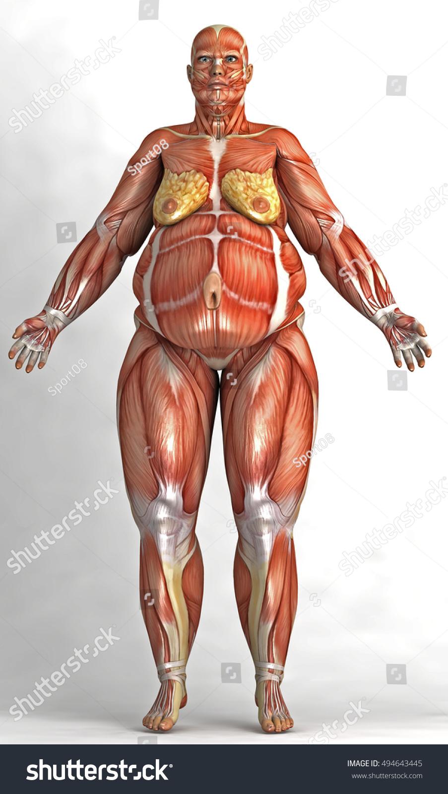 Fat Render Woman Skin Shape Anatomical Stock Illustration 494643445