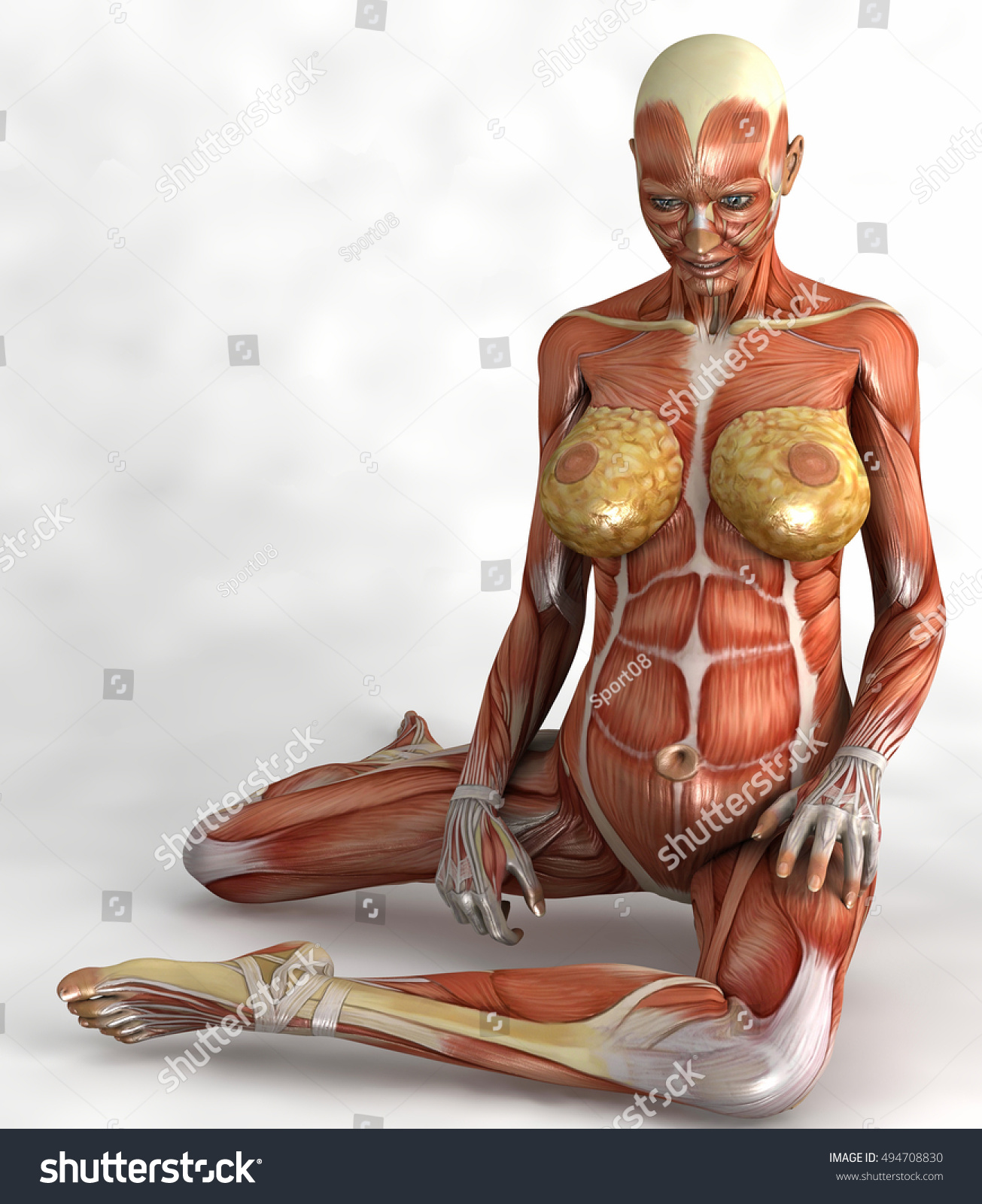 Sitting Render Pregnant Woman Skin Muscles Stock Illustration ...