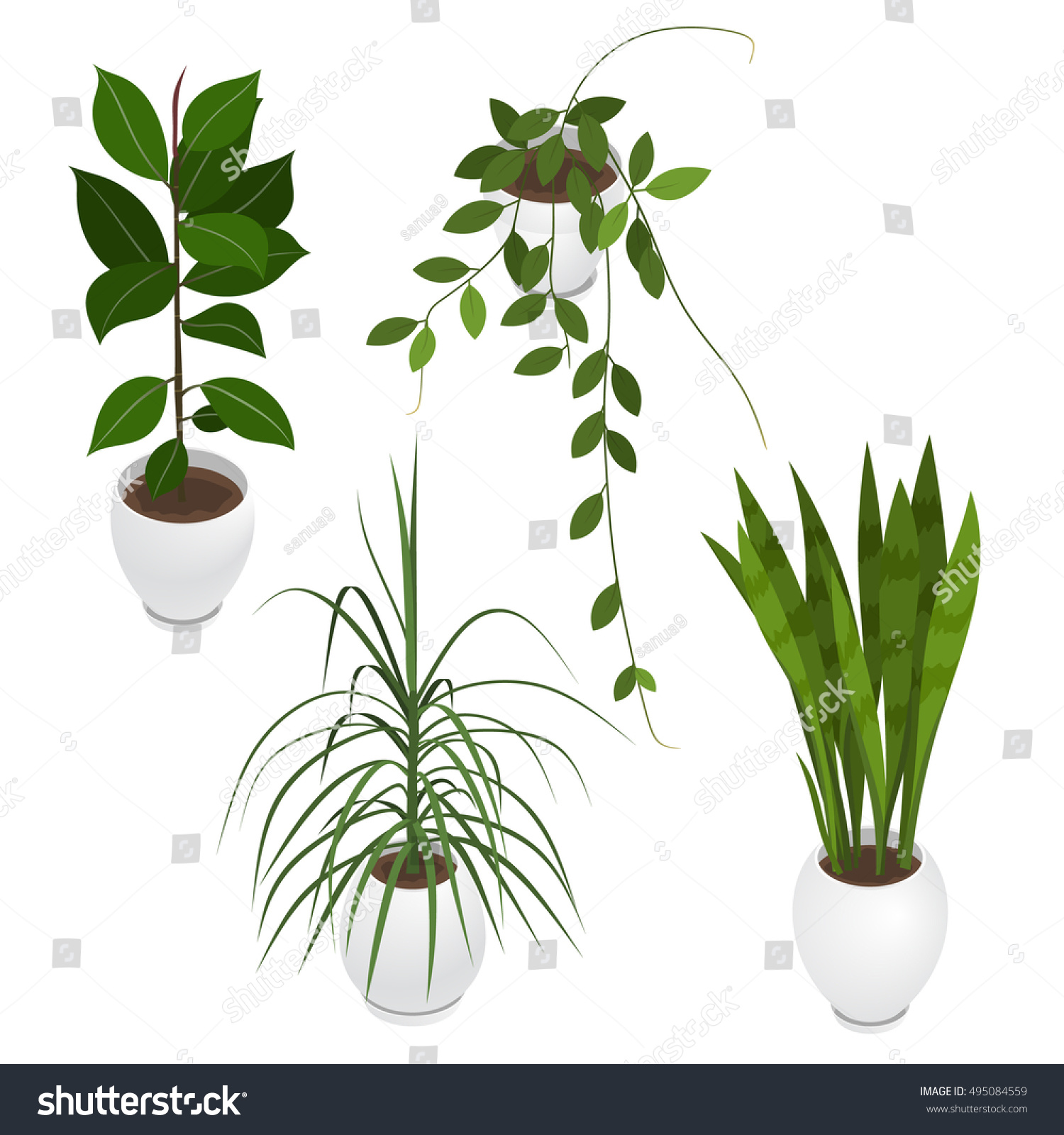 indoor home office plants royalty. Set Of Potted Indoor, Office And House Plants. Collection 3d Flower Pots With Indoor Home Plants Royalty R