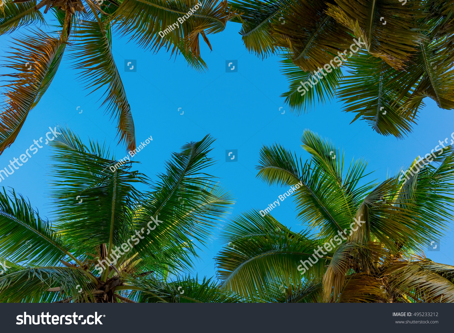 View Top Palm Tree Blue Sky Stock Photo 495233212 ...