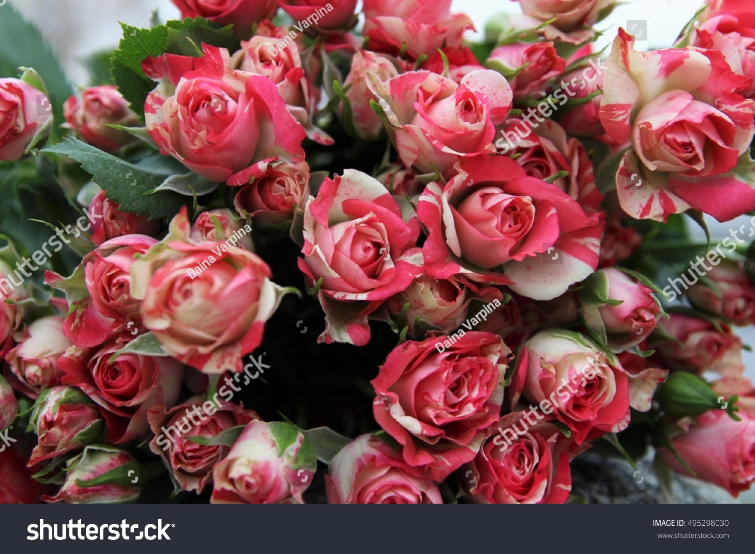 Pink rose flower bouquet background pink stock photo edit now pink rose flower bouquet background pink rose blossoms izmirmasajfo