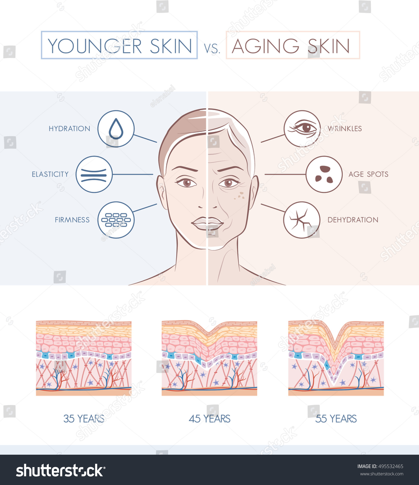 Young Healthy Skin Older Skin Comparison Stock Vector Royalty Free