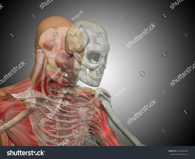 Anatomy Concept 3 D Illustration Human Man Stock Illustration ...