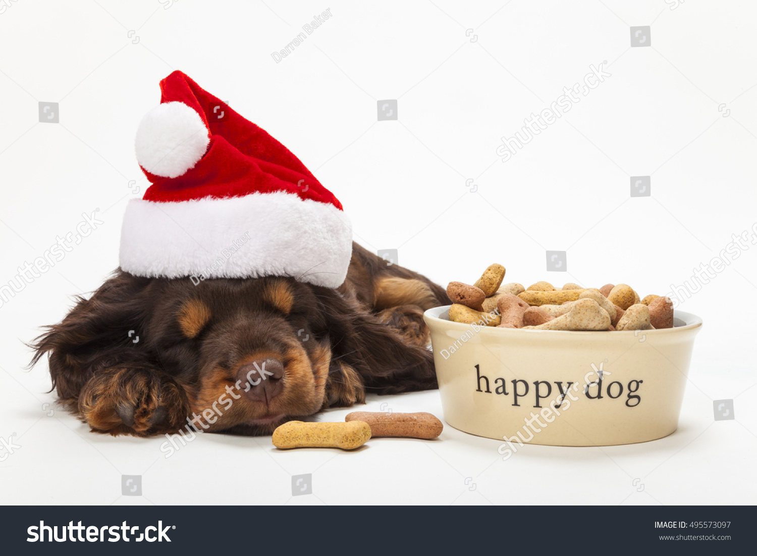 Uncategorized Cute Dog Bowl cute white dog bowls collapsible pet travel bowl feeder paw cocker spaniel puppy wearing a christmas santa hat sleeping by happy of