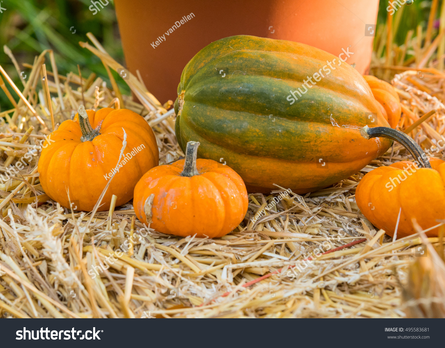 small pumpkins on hay bale large stock photo edit now 495583681