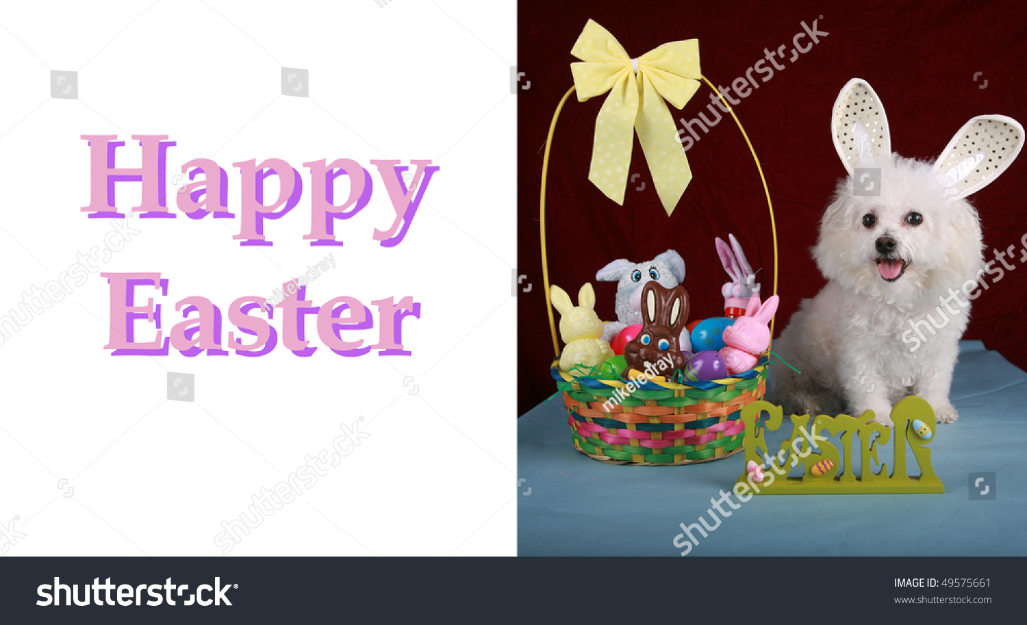 Bichon Frise Poses Easter Bunny On Stock Photo Edit Now 49575661