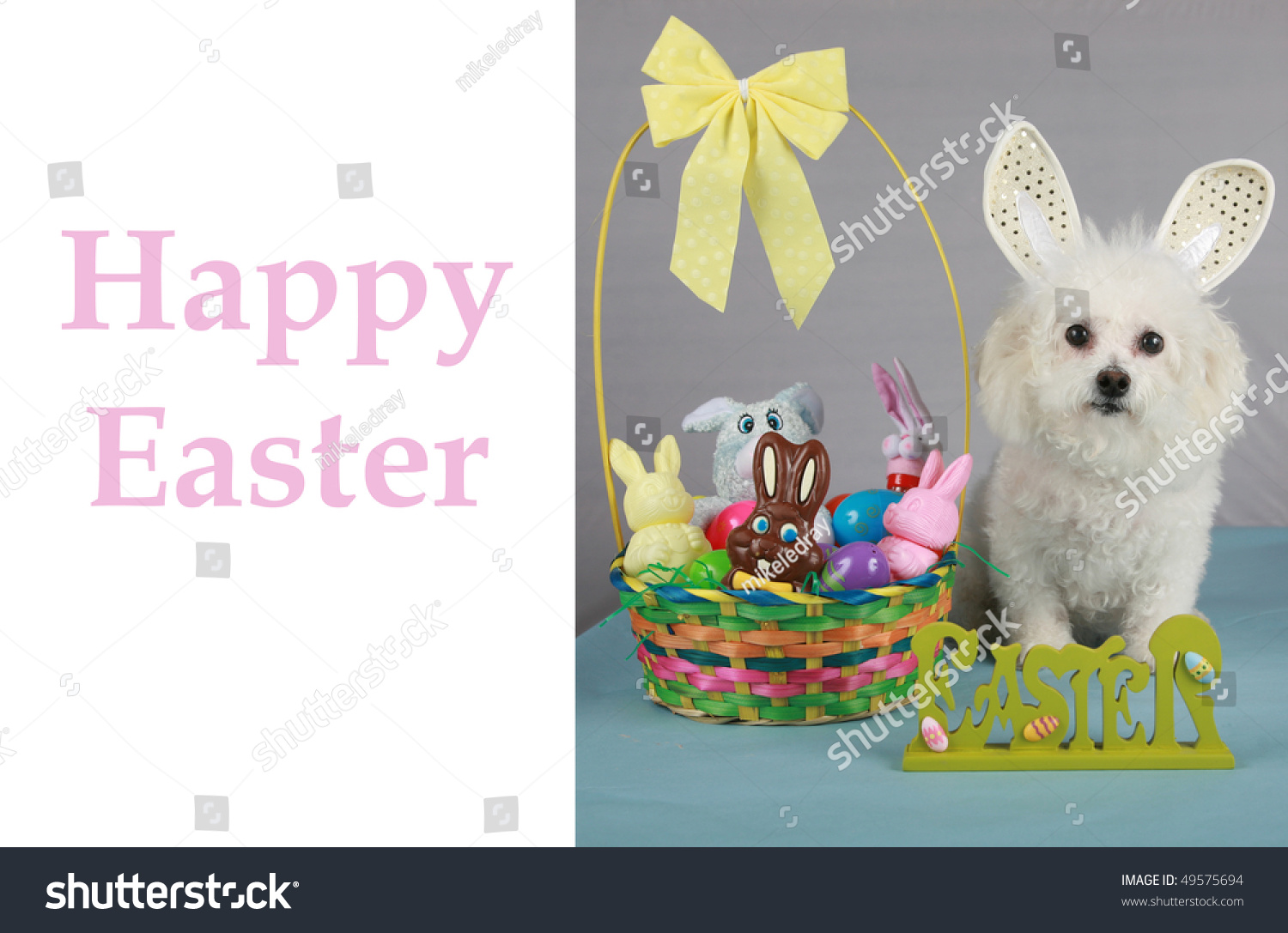 Bichon frise poses easter bunny on stock photo edit now 49575694 a bichon frise poses as the easter bunny on a greeting card concept with m4hsunfo