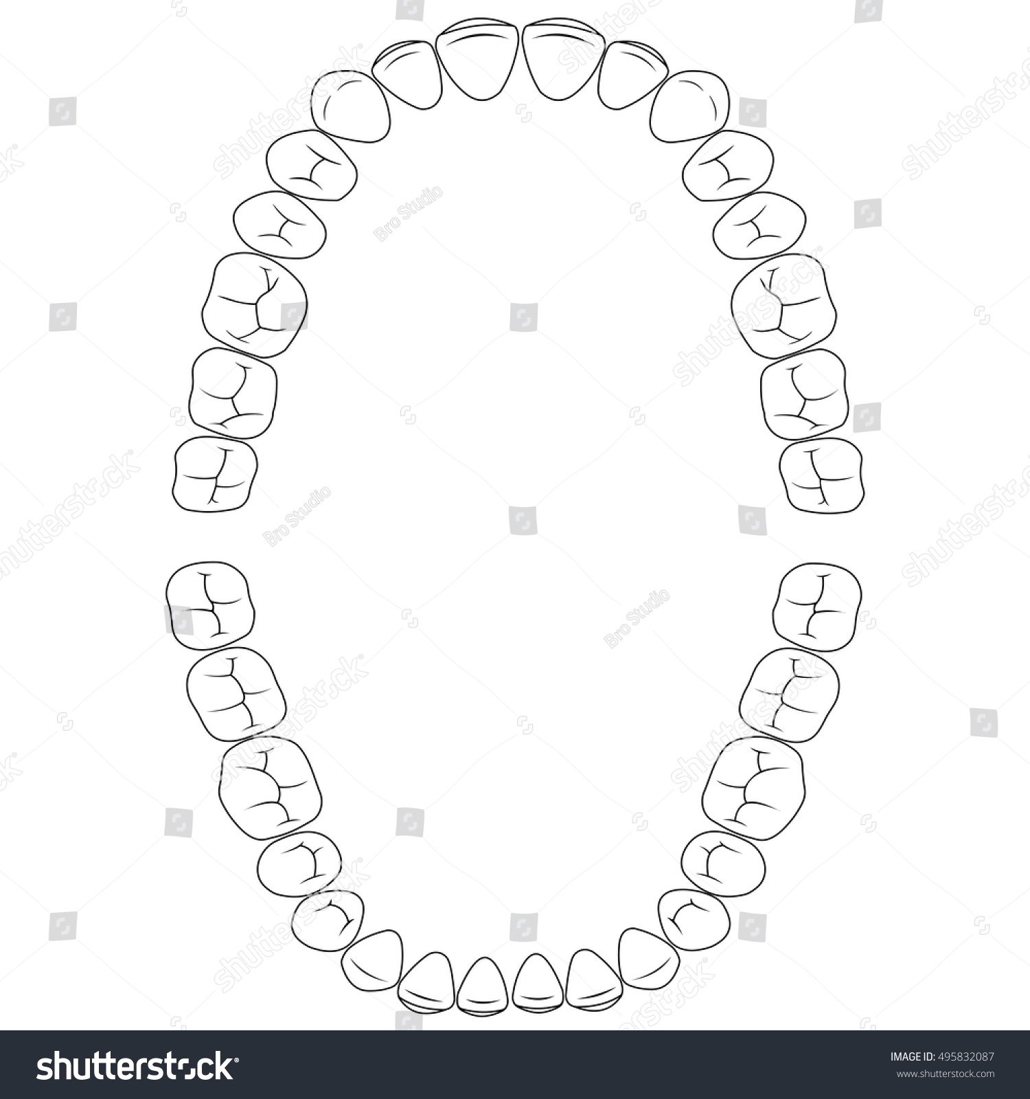 set fissures teeth chewing surface teeth stock vector