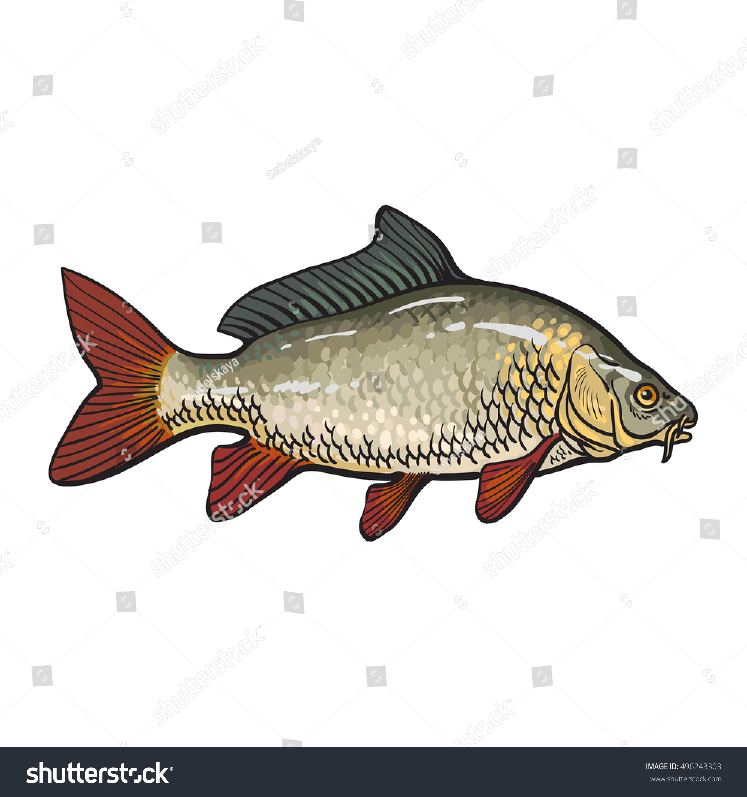 Hand drawn golden carp sketch style stock vector 496243303 for Edible freshwater fish
