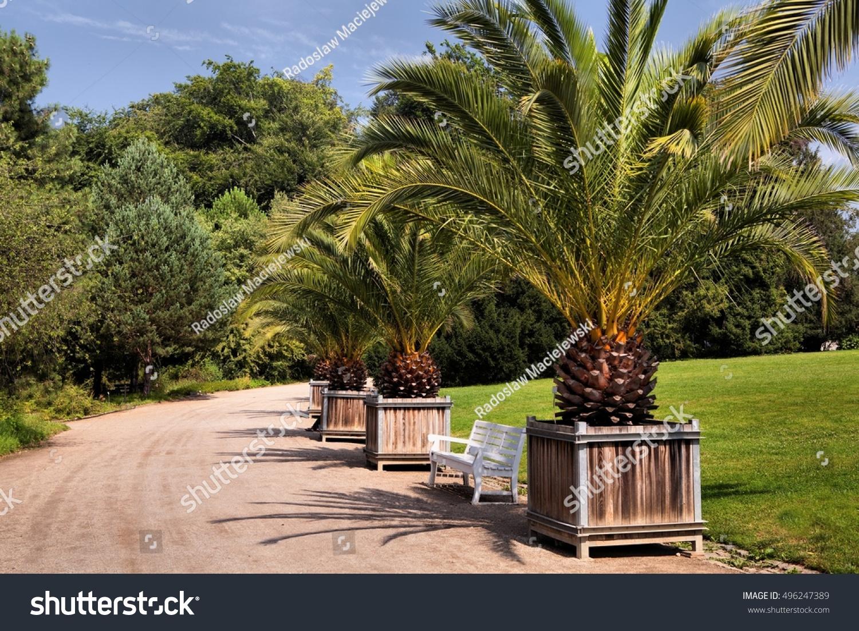Palm Tree Botanical Garden Berlin Stock Photo (Royalty Free ...