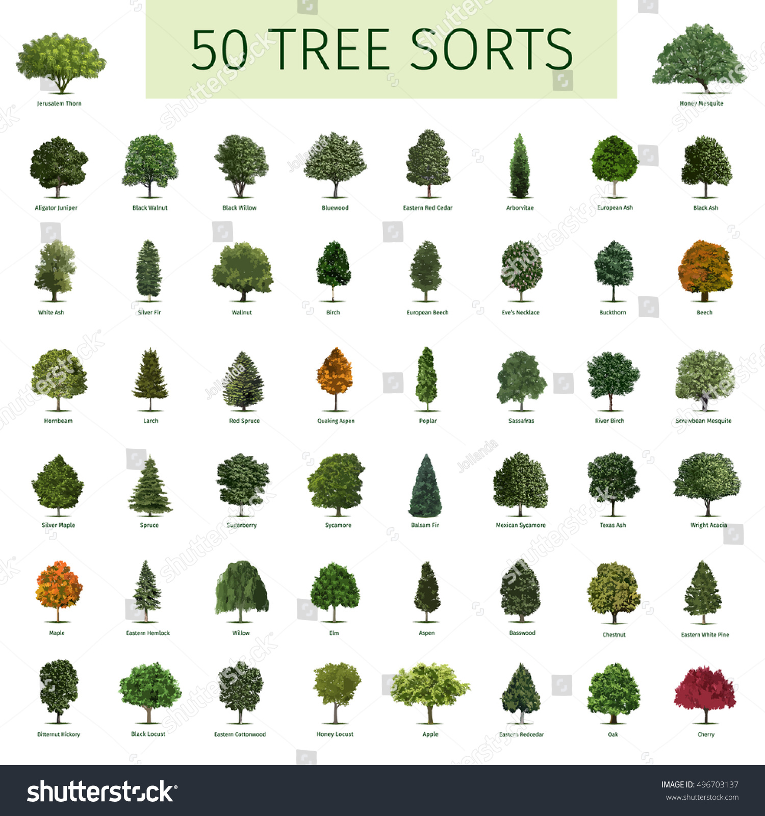 Fifty Different Tree Sorts Names Illustrations Stock