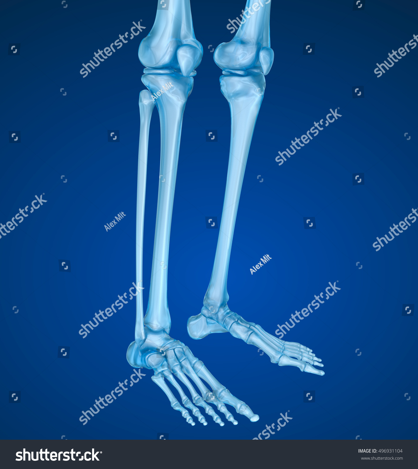 Knee Anatomy Xray View Medically Accurate Stock Illustration