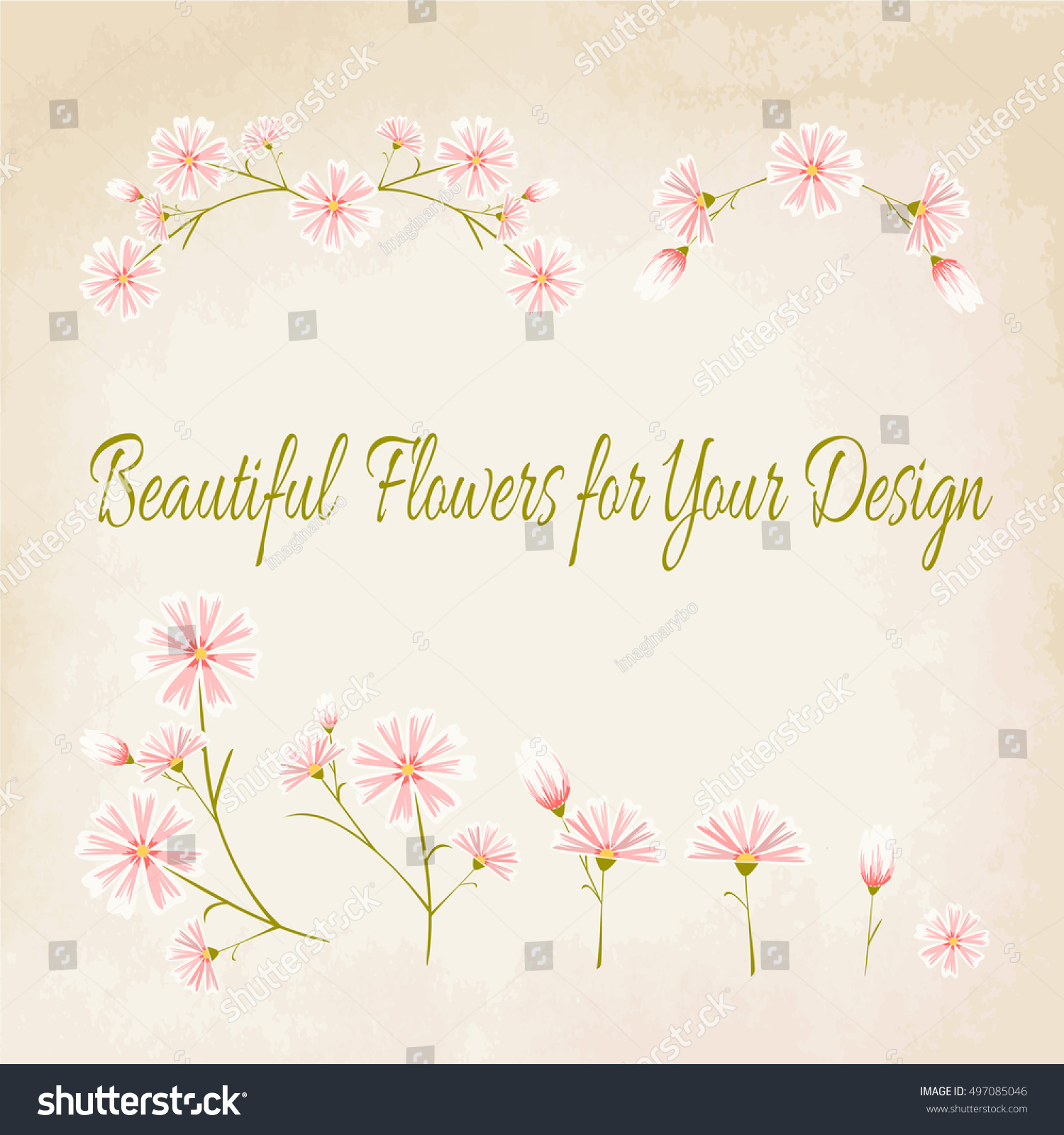 Aster daisy flowers set pink floral stock vector 497085046 aster daisy flowers set of pink floral parts and elements isolated on vintage beige background izmirmasajfo