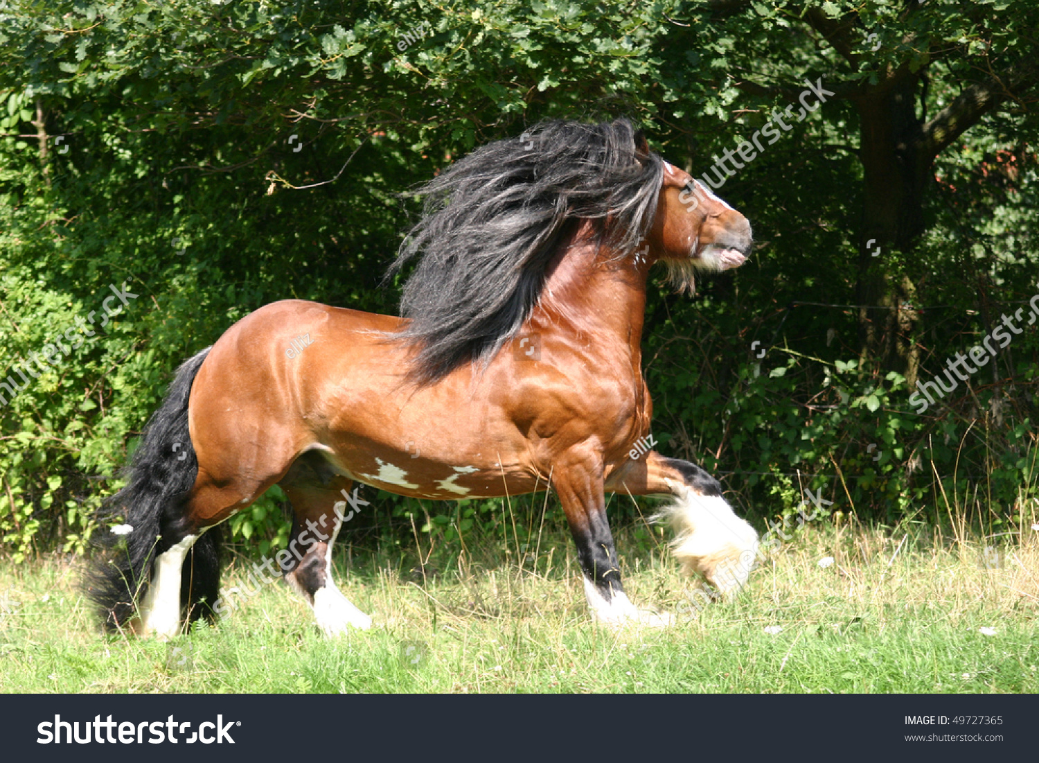 image Muscular stallion is about to join in