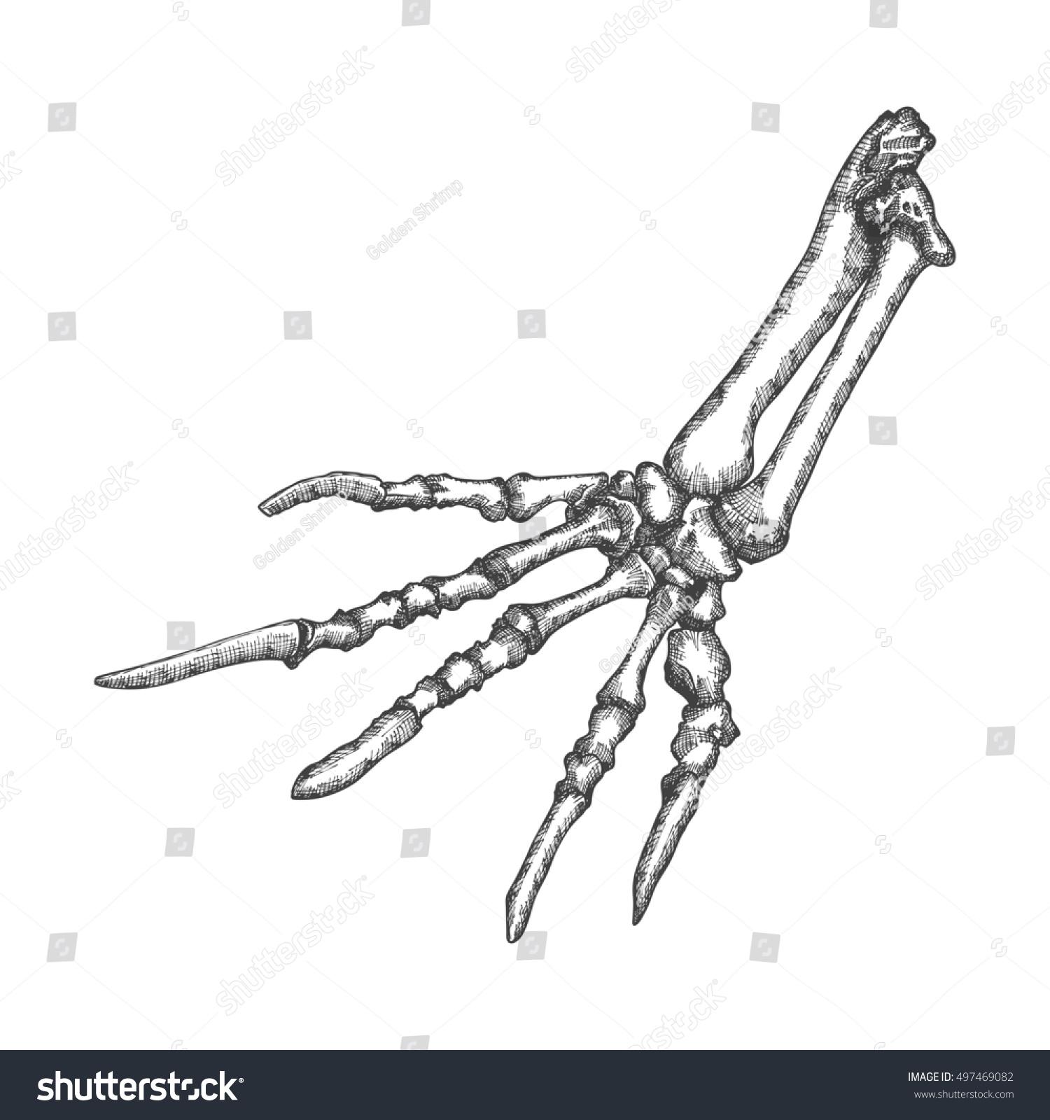 Stylized Drawing Lizard Bones Hand Decorative Stockillustration