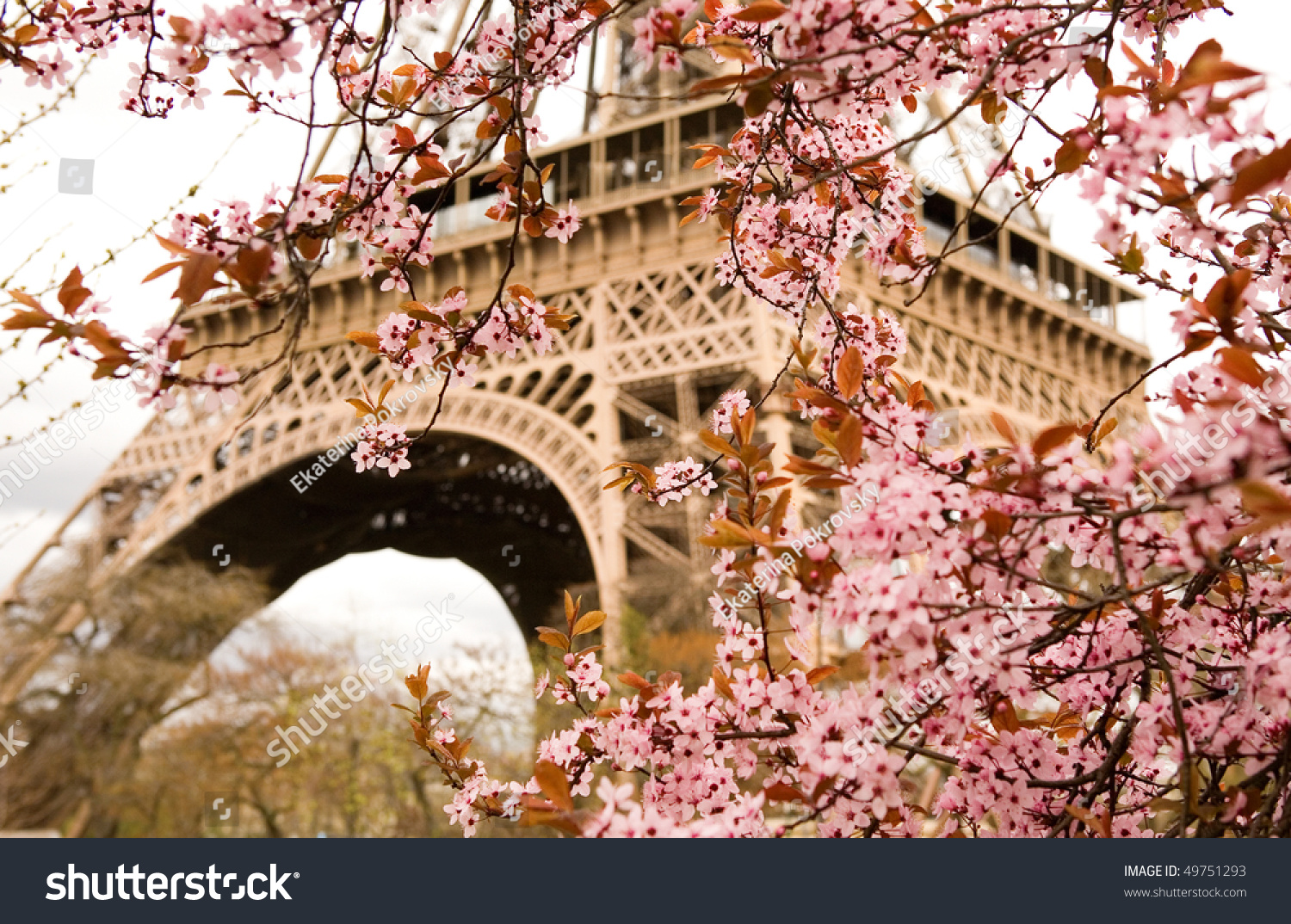 spring paris bloomy cherry tree eiffel stock photo 49751293 shutterstock. Black Bedroom Furniture Sets. Home Design Ideas
