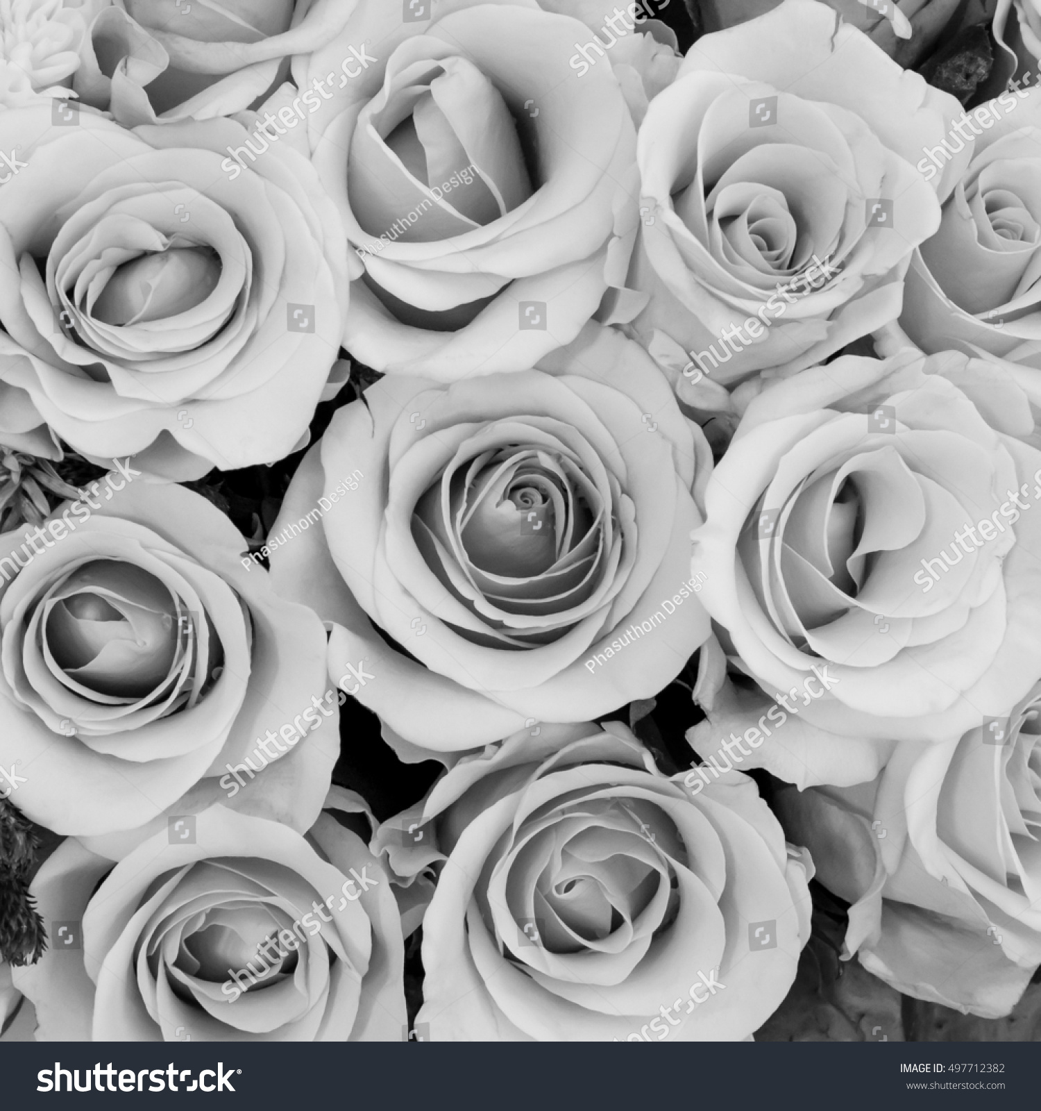 Group Beautiful Roses Flower Black White Stock Photo Edit Now
