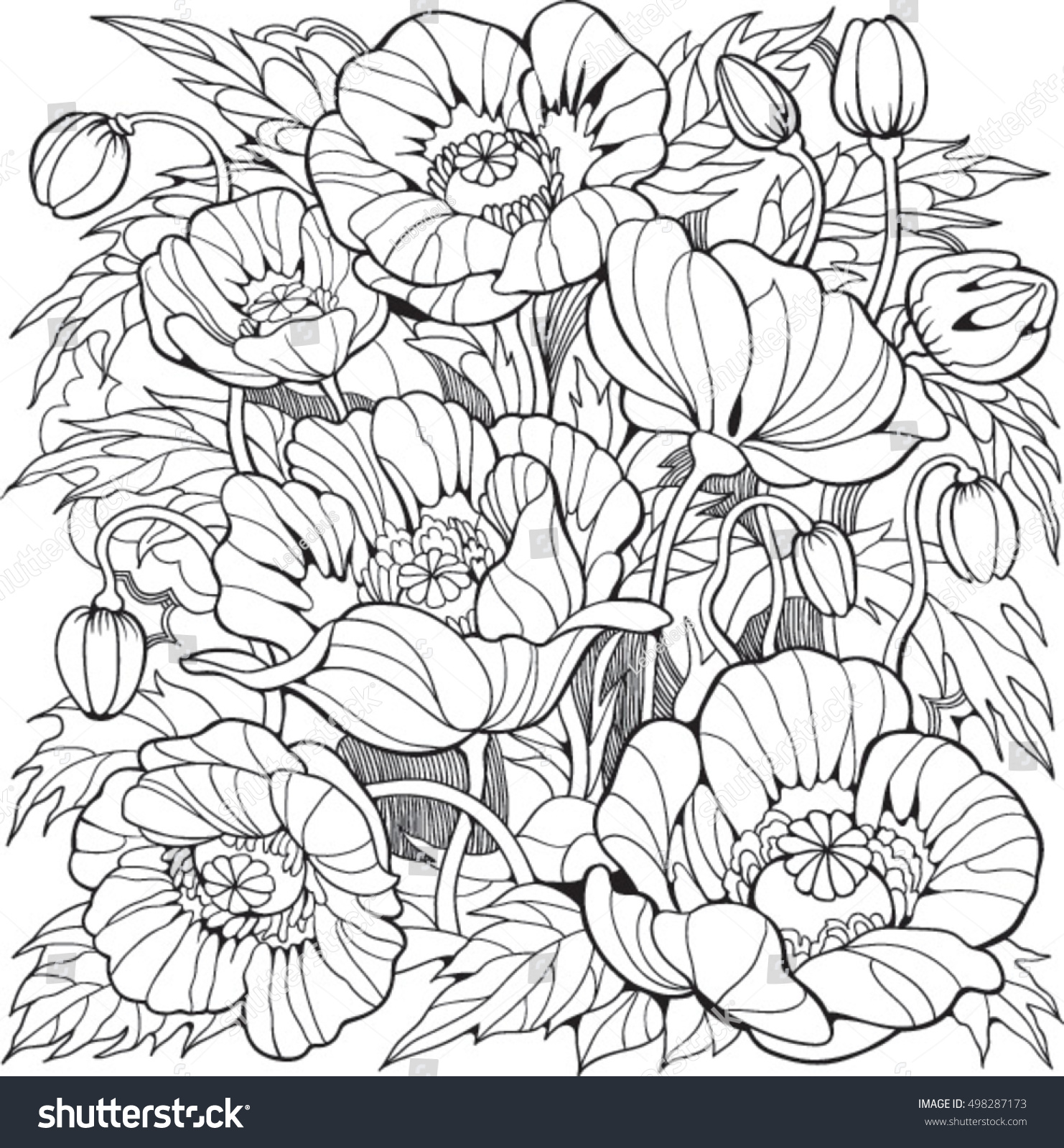 poppy flowers coloring page older stock vector 498287173
