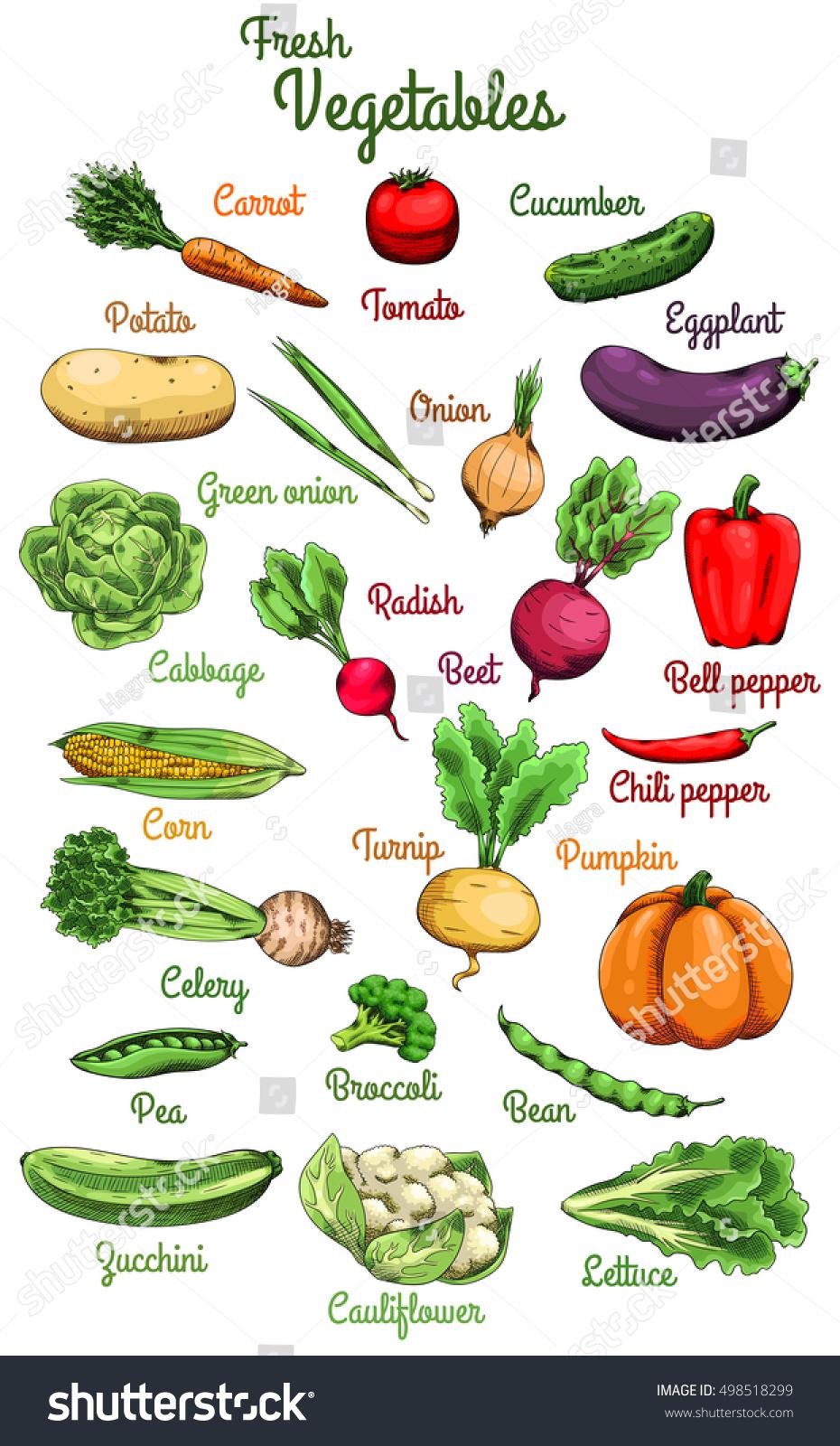 37 png Clipart files Instant Download watermelon fruit vegetable pepper potato tomato blueberry onion radish carrot FARMER/'S MARKET Clipart