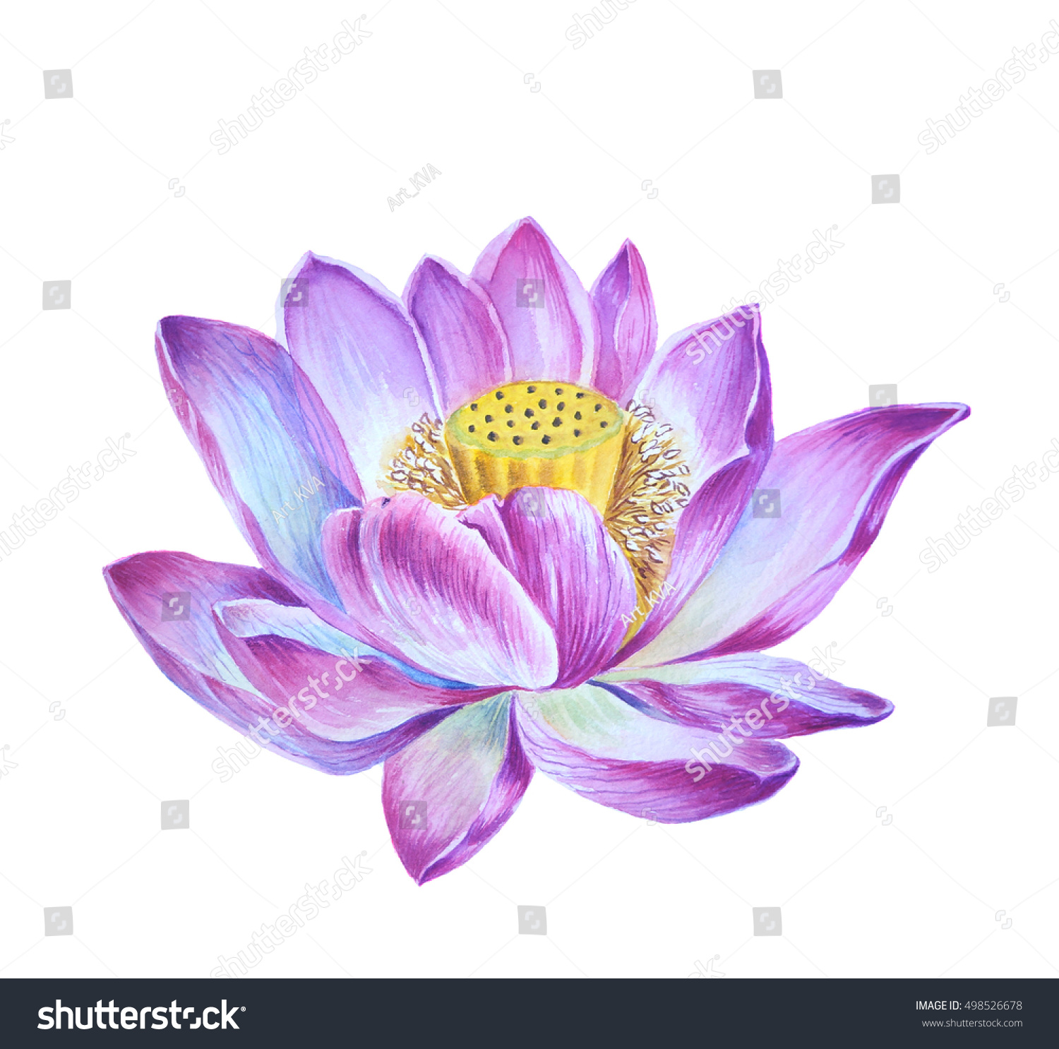 Purple lotus flower on isolated white stock illustration 498526678 purple lotus flower on an isolated white background izmirmasajfo Gallery