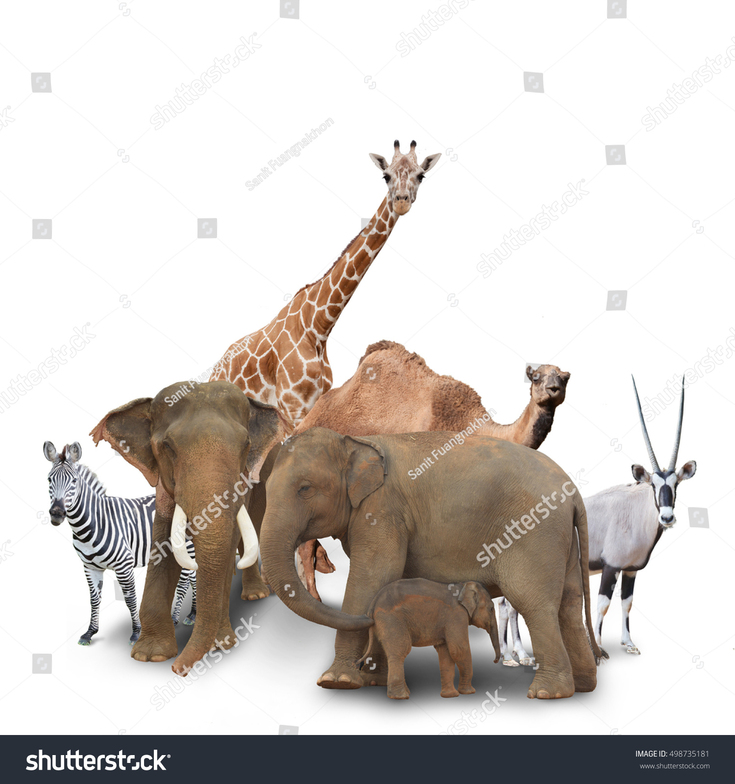 group animals grouped together on white stock photo 498735181