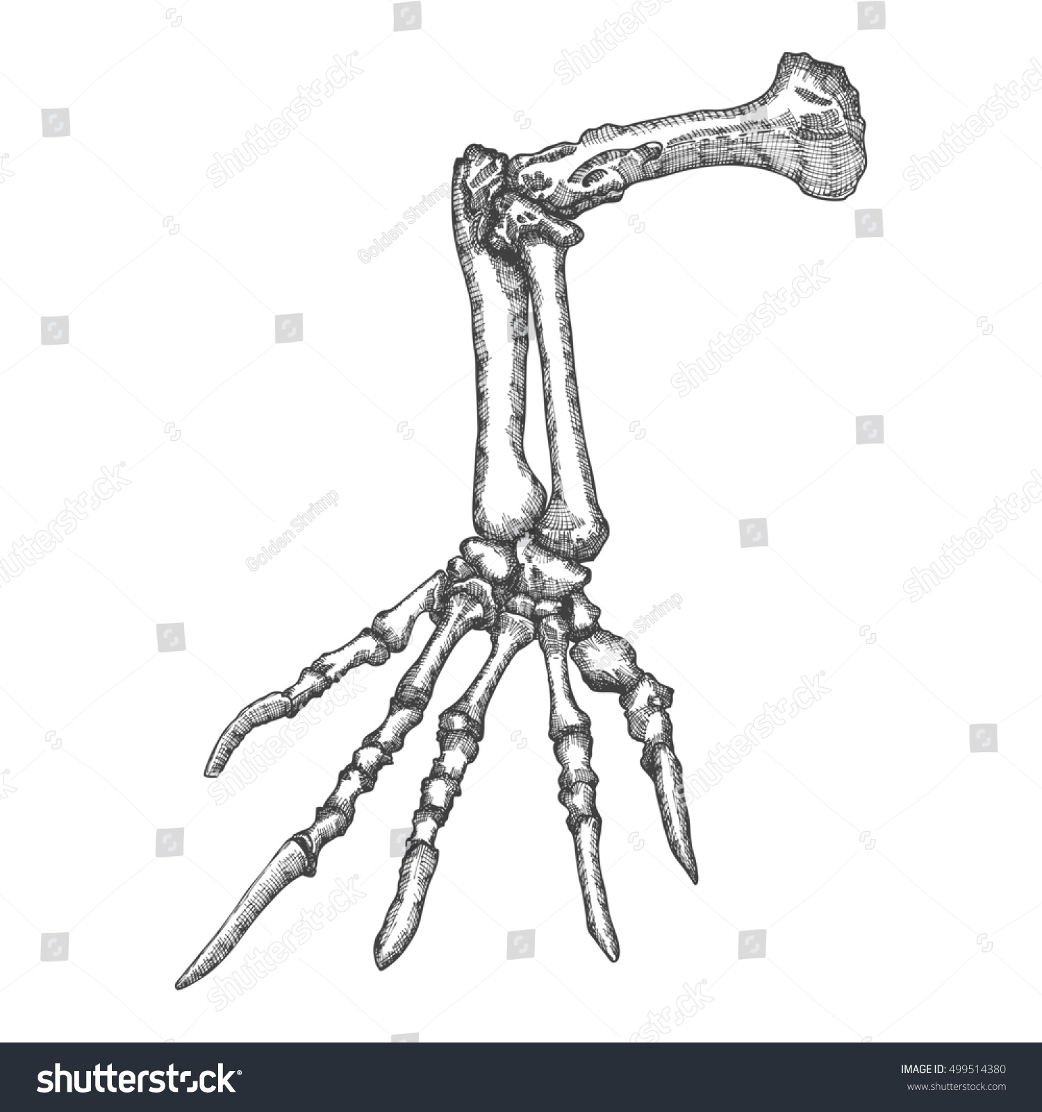 Stylized Drawing Lizard Bones Hand Decorative Stock Illustration ...