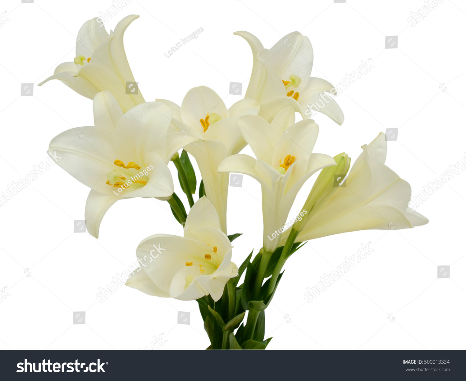 Beautiful White Easter Lily Flower Bouquet Stock Photo Download Now