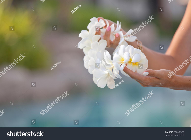 Woman hands holding flower lei garland of white plumeria welcoming id 500086402 izmirmasajfo