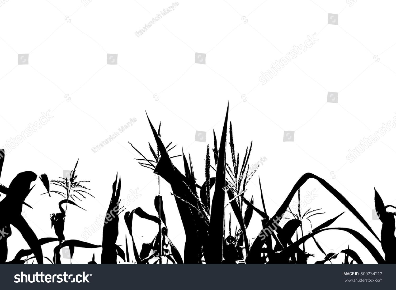 Corn Stalks Tracing Ve...