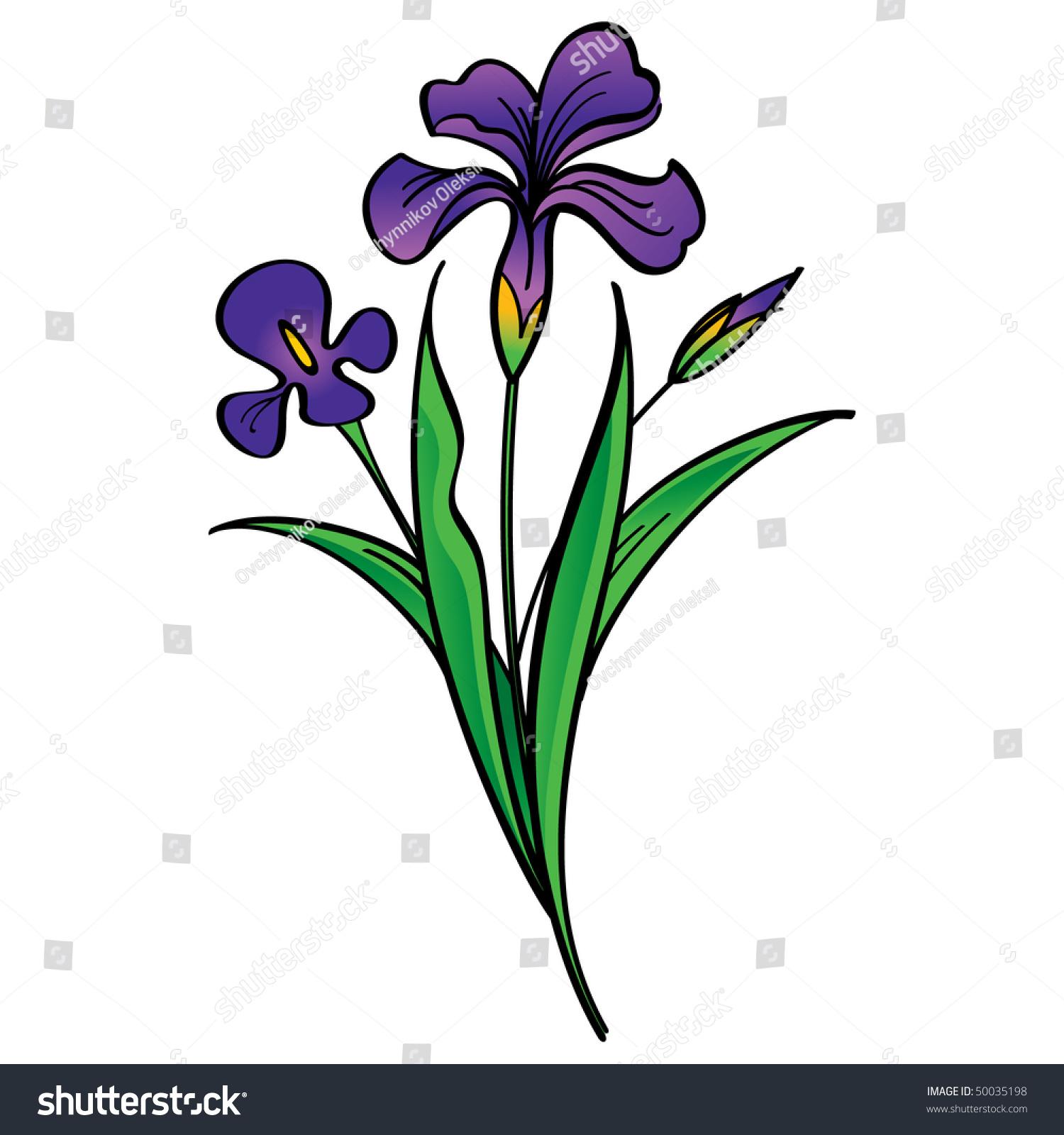 iris beautiful flowers stock vector royalty free 50035198 rh shutterstock com