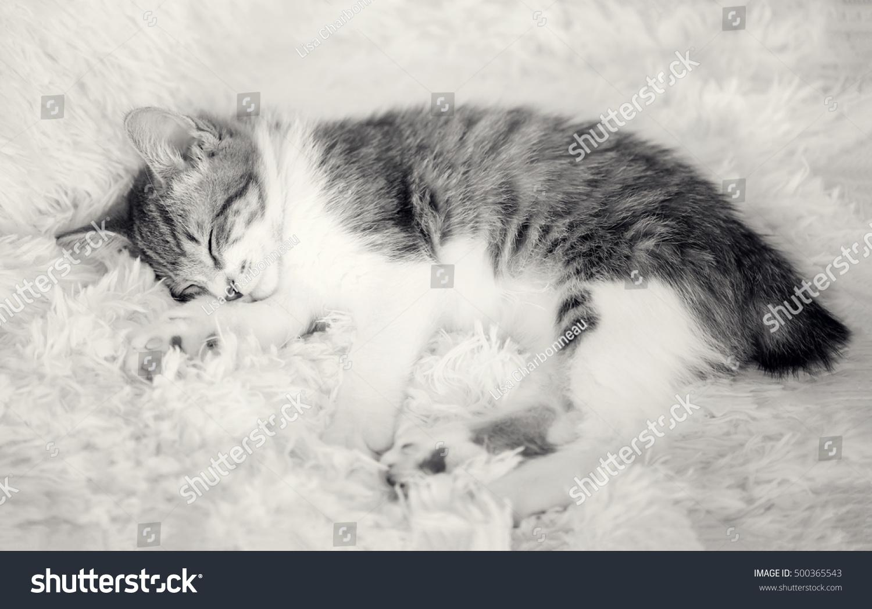 Cute Kitten Sleeping Stock Shutterstock