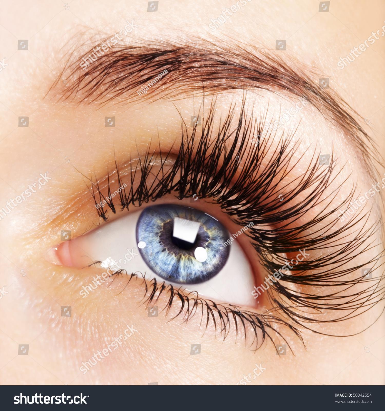 Woman Blue Eye Extremely Long Eyelashes Stock Photo 50042554 ...
