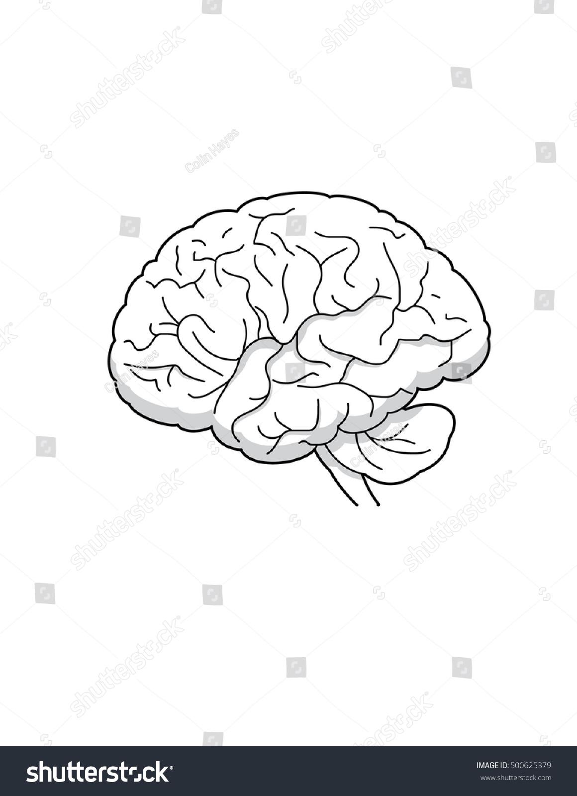 Line Drawing Human Brain Stock Vector Royalty Free 500625379