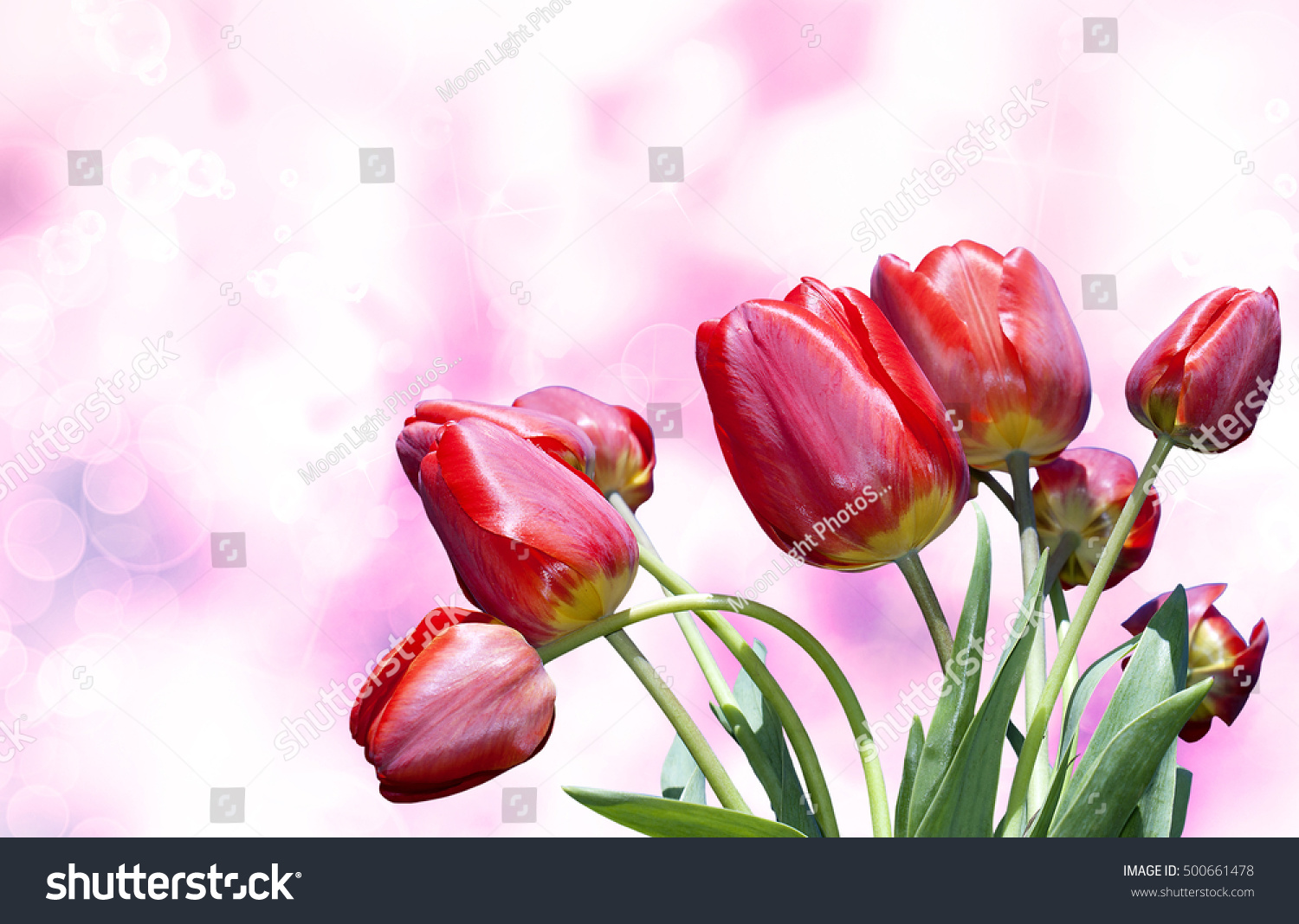 Beautiful tulip flower on pink abstract stock photo edit now beautiful tulip flower on pink abstract backgroundture poster izmirmasajfo