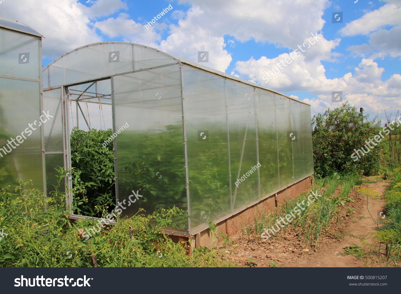 Modern Rectangular Polycarbonate Greenhouse Summer Sunny