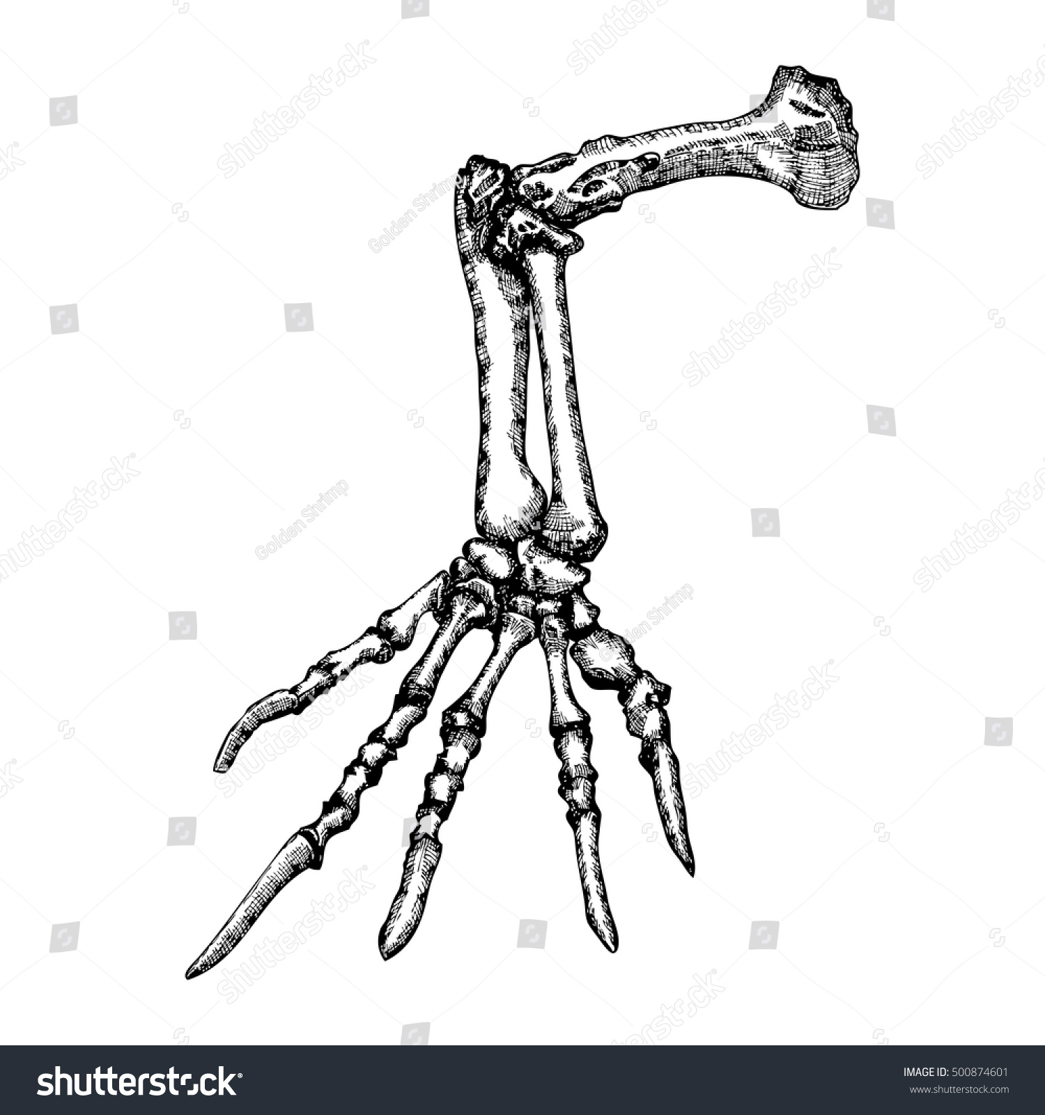 Stylized Drawing Lizard Bones Hand Decorative Stock Vector (2018 ...